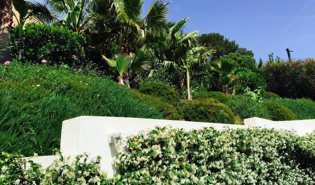 Plantations d'ornement, palmiers bananiers